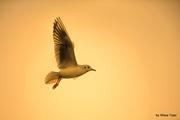 Fly, Robin, Fly Vol. 2