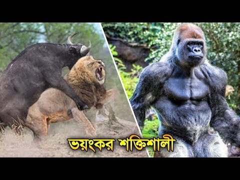 Top 10 Most Powerful Animals on Planet Earth