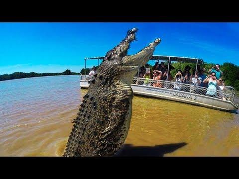 BIGGEST Crocodiles In The World!