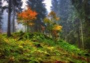 magia del bosco.....