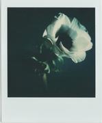 La ricerca della bellezza più semplice (anemone)