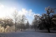Alba al parco