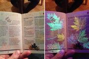 Buy a original ielts/pte/passport in Australia,Belgium online.