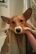 Emergency Bath!