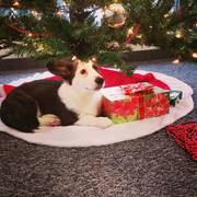 Harrison's first Christmas