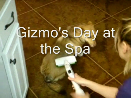 Gizmo's Day at the Spa