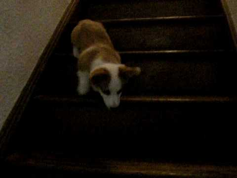 1st time down the stairs.