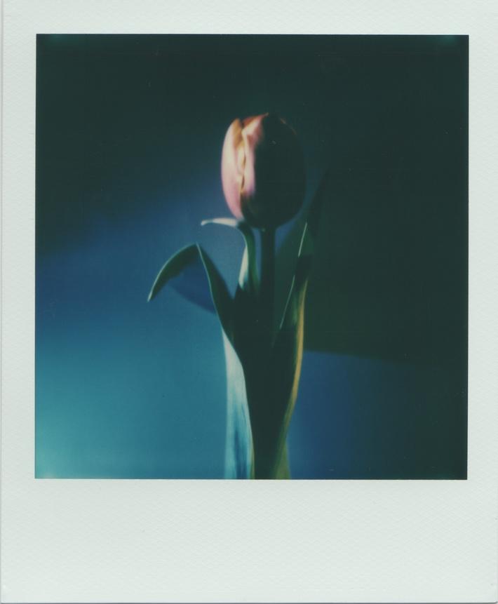 La ricerca della bellezza più semplice (blu I)