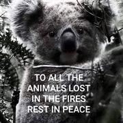 AUSTRALIA ANIMALS LOST