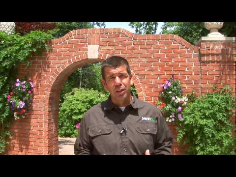 Top Questions to Ask When Hiring an Arborist