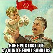 Baby Bernie