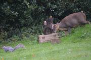 My wildlife haven garden