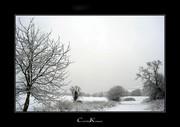 Last Winter Scenery