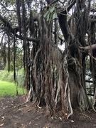 Tarzan Trees