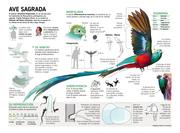 ELQUETZAL, ave sagrada y símbolo nacional