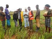 Experiencia de trabajo en África