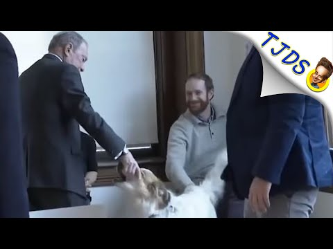 Bloomberg Weirdly Grabs Dogs Face Instead Of Petting It