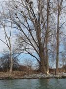 Beavers vs. Motor Island