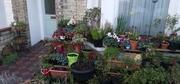Spring pot plants