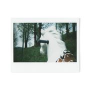 cavallo di campagna