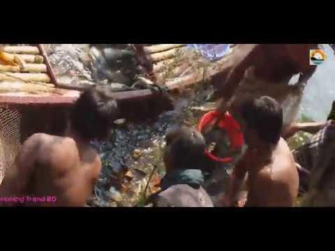 Amazing Net Fishing   Best Net Fishing Video   জালে মাছ  শিকার