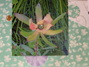 Golden Protea from Fleur, Thank you!