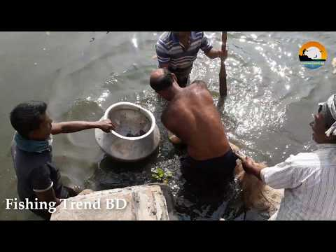 Catching Fish By Net And Hand | Best Net Fishing | Fishing Trend BD