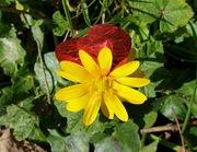 Come nascono i fiori a Terni x S. Valentino