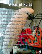 A Parrot Rules