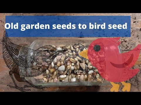 Use your old seeds as bird seed -Quick tip