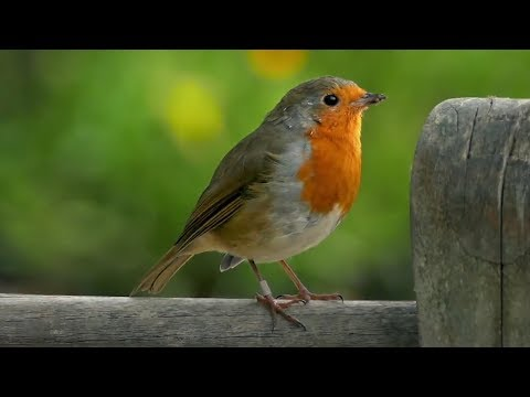 "Peaceful Instrumental Music, Relaxing Nature music, ""Nature's Morning Song"" by Tim Janis"
