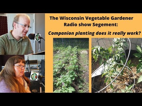 Segment 2 of S4E2 Companion planting does it work? - Garden talk radio