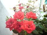 Flores urbanas