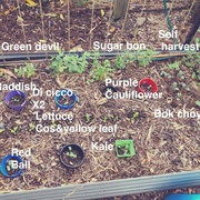 Bed 5 planted out