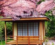 Cherry Blossom Festival 2020 POSTPONED TOO