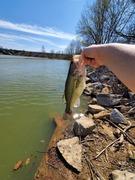 Green carp!