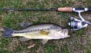 15'' Largemouth Bass (3-26-20)
