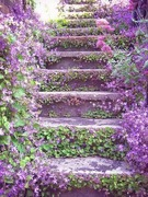 Violas steps to the fairy hillside