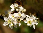 """""""una-bella-fioritura"""""""