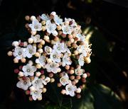 """bouquet-in-fiore"""