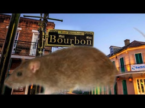 Chicago Crime Plummets With Stay-At-Home Order As Rats Swarm New Orleans' French Quarter
