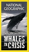 Whales in Crisis (NGHT, 2006)