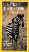 Zebra - Patterns in the Grass (Explorer, 1991)