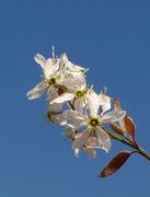 """fiori-stella"""