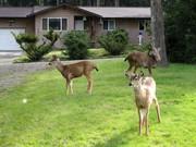 3 visitors