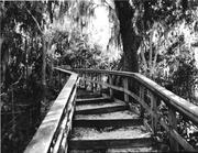 Mound Steps Indian Brandenton Florida