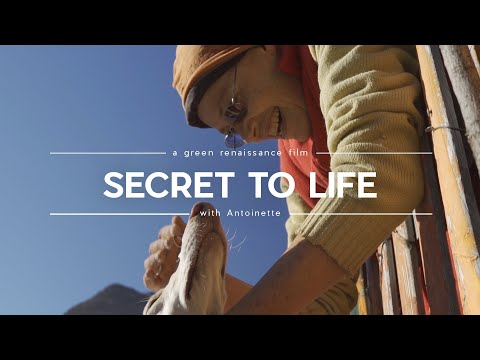 Secret to Life/ EL SECRETO DE LA VIDA