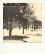 Snow in the garden