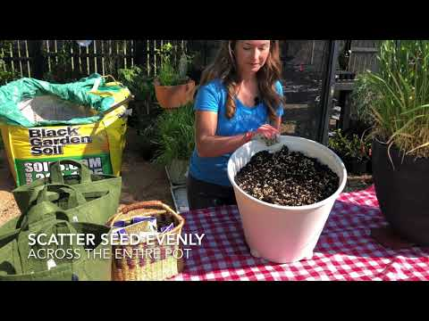 Grow Rice in containers At Home