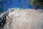 In Tall Grass